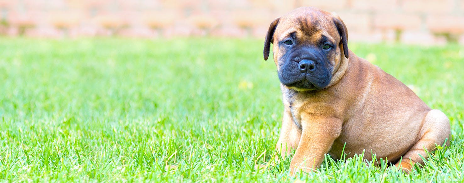 Dog Names Meaning Fire Popular Male And Female Names Wag