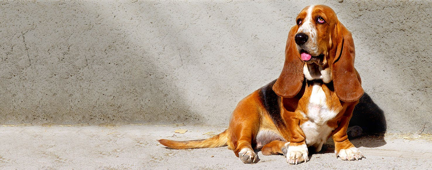 The Fox and the Hound Dog Names   Popular Male and Female