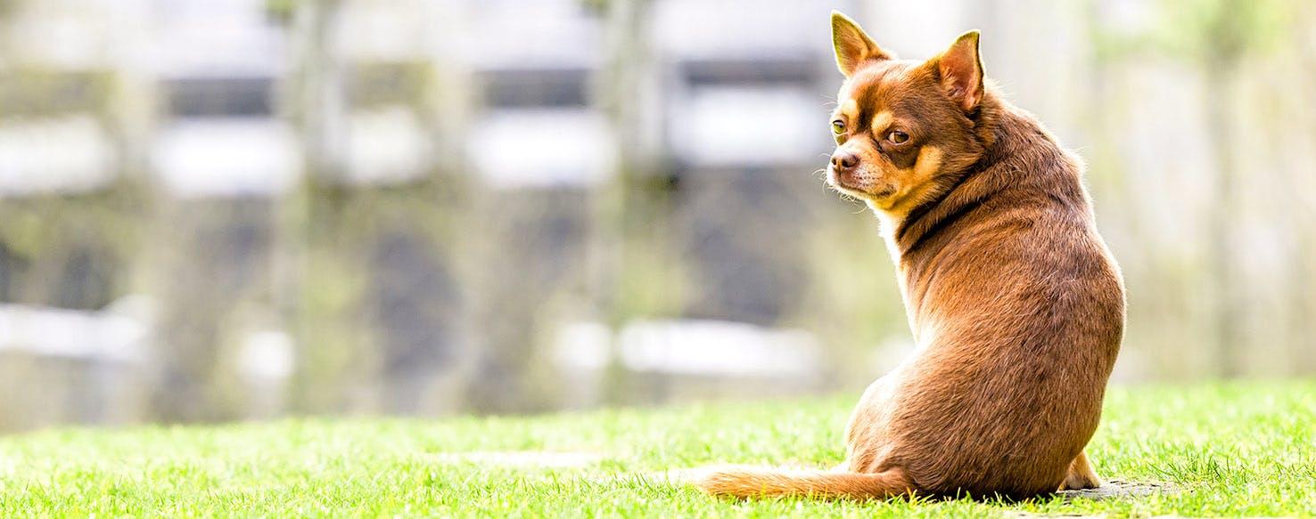 Fantastic Mr  Fox Dog Names | Popular Male and Female Names
