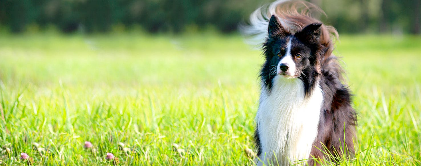 Dog Names Meaning Playful | Popular Male and Female Names | Wag!