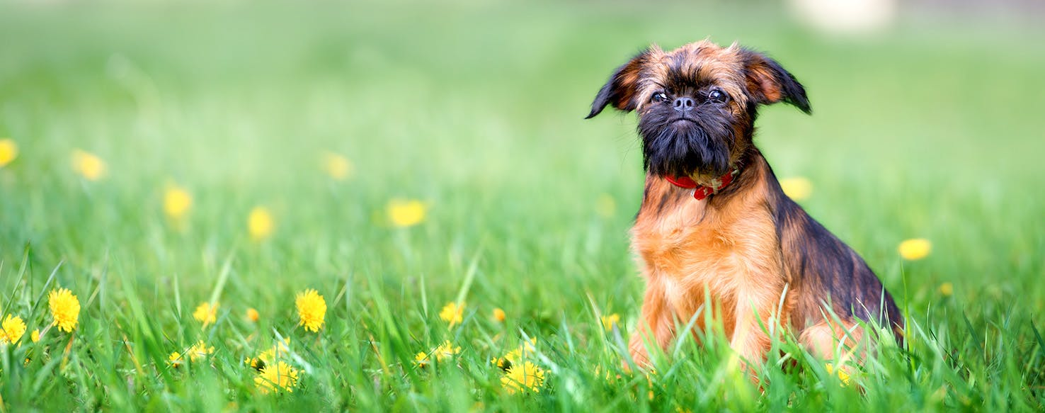 Dog Names that Start with V | Popular Male and Female Names