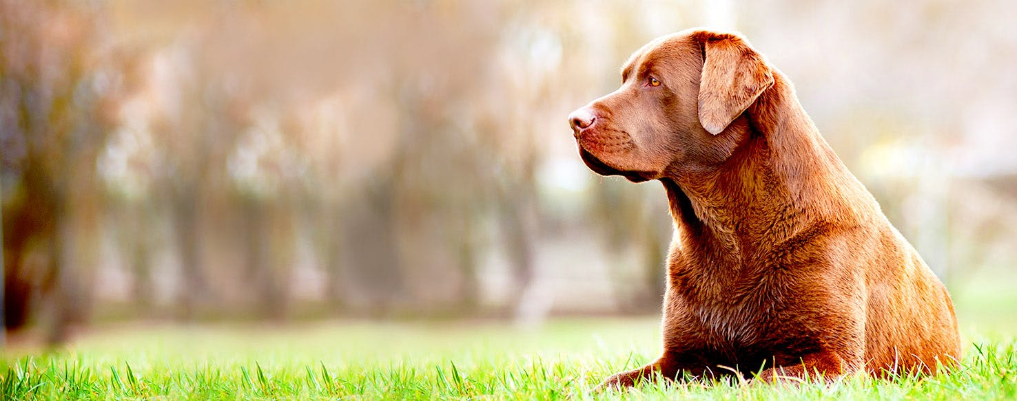 Dog Names Meaning Calm | Popular Male and Female Names | Wag!