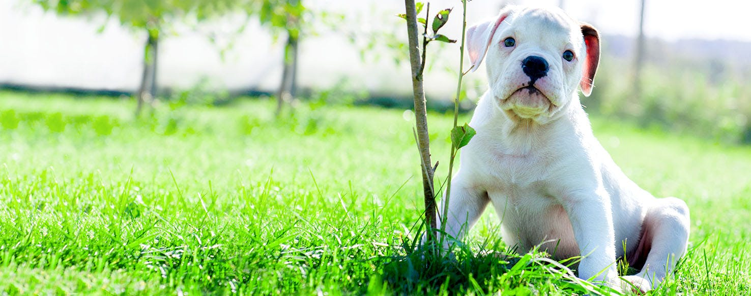 Celebrity Inspired Dog Names | Popular Male and Female Names