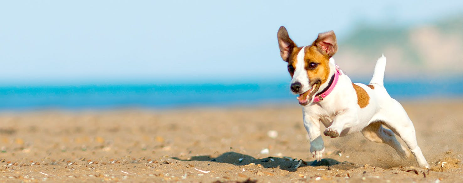 Weather Dog Names | Popular Male and Female Names | Wag!