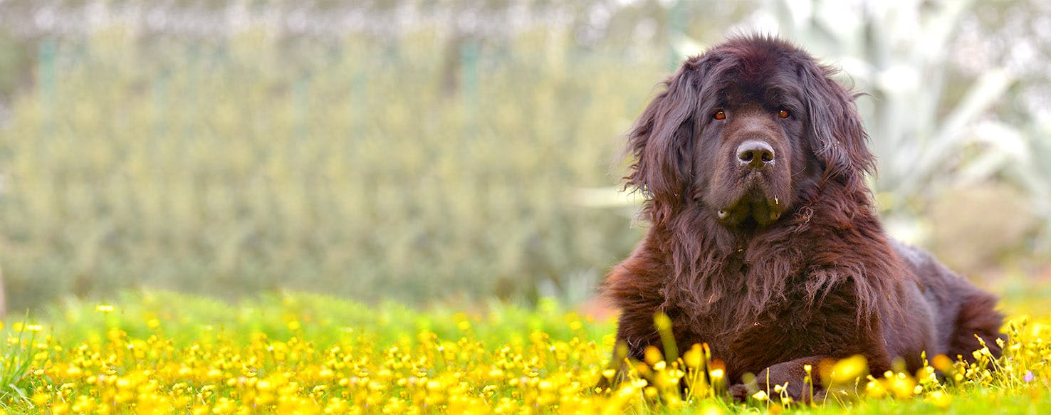 Country Dog Names Popular Male And Female Names Wag