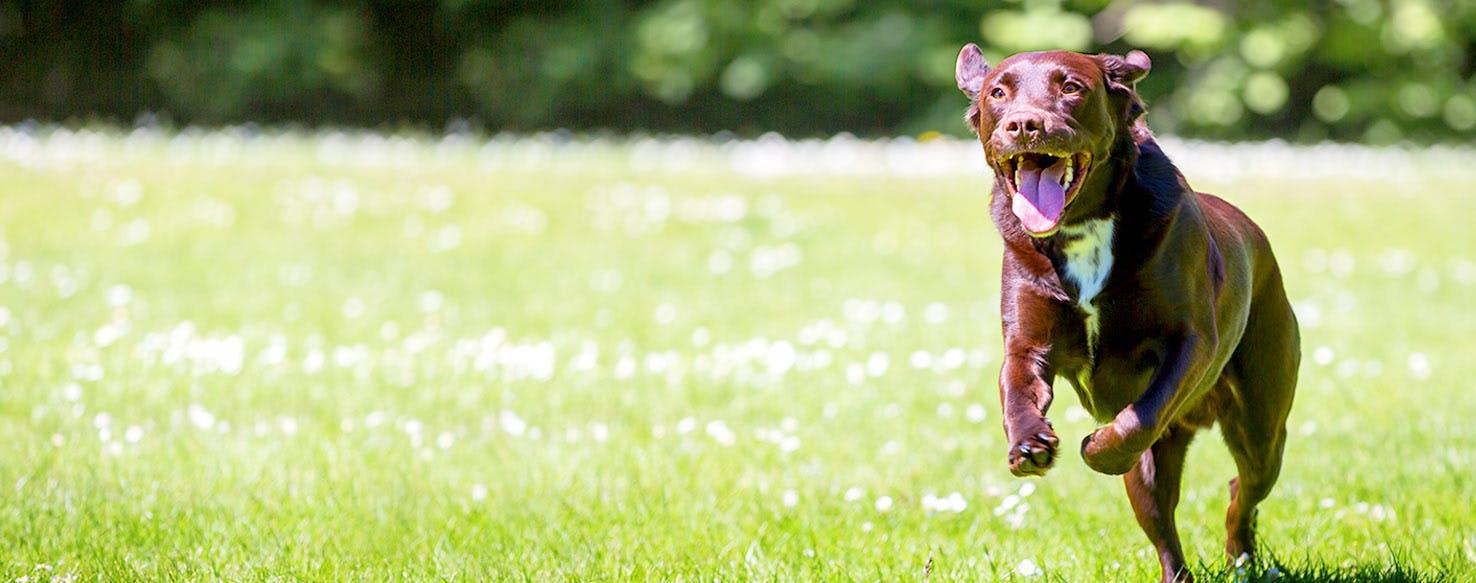 walk for dog guides hanover lions