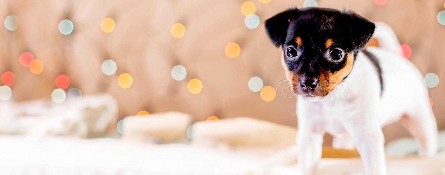 Dog Names that Start with Ba | Popular Male and Female Names | Wag!