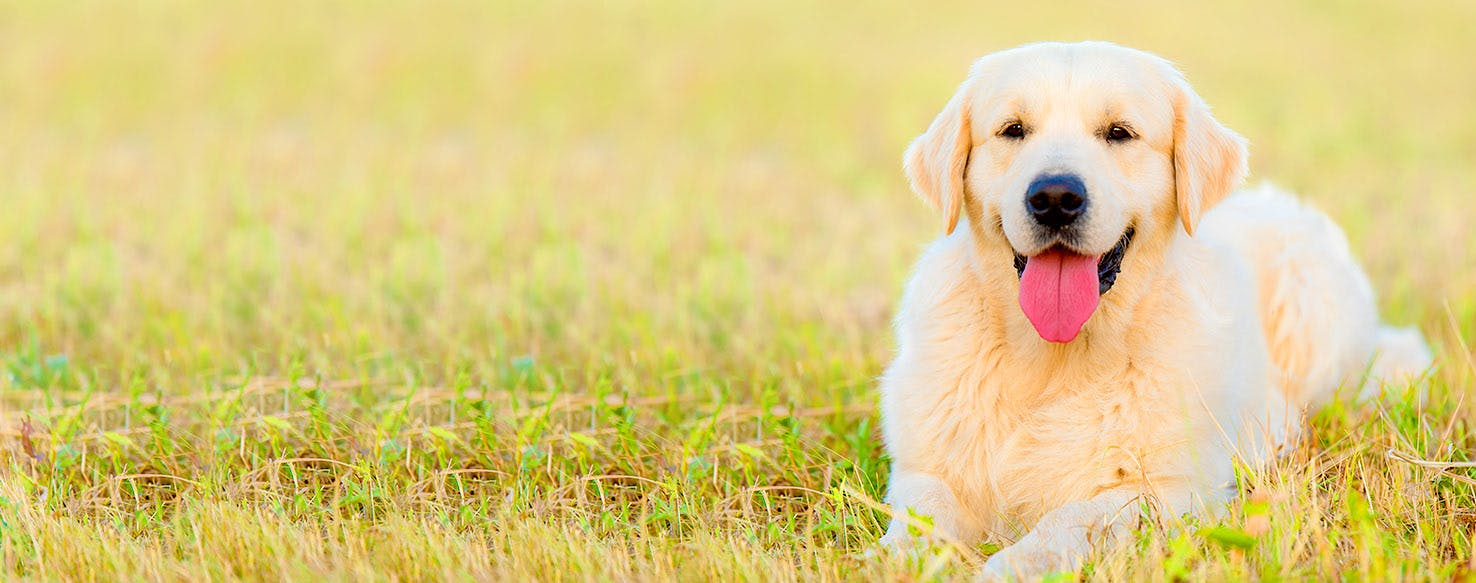 Beach Life Dog Names | Popular Male and Female Names | Wag!