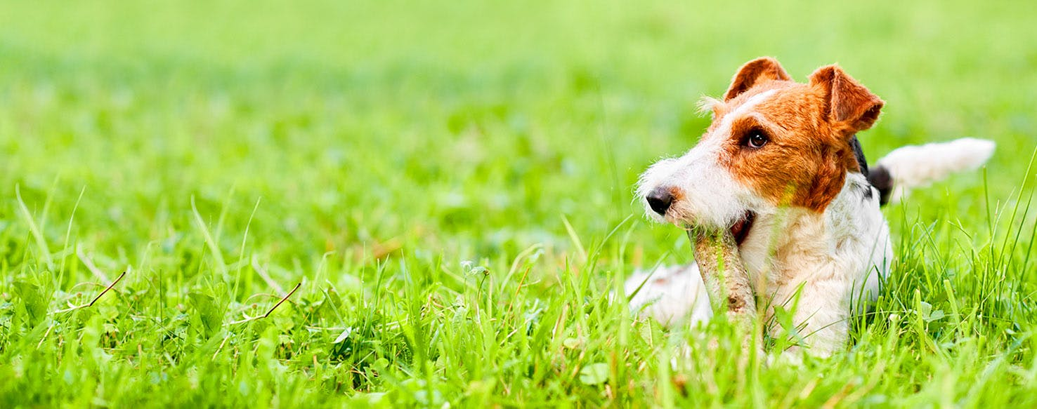 Dog Names that Start with Mo | Popular Male and Female Names