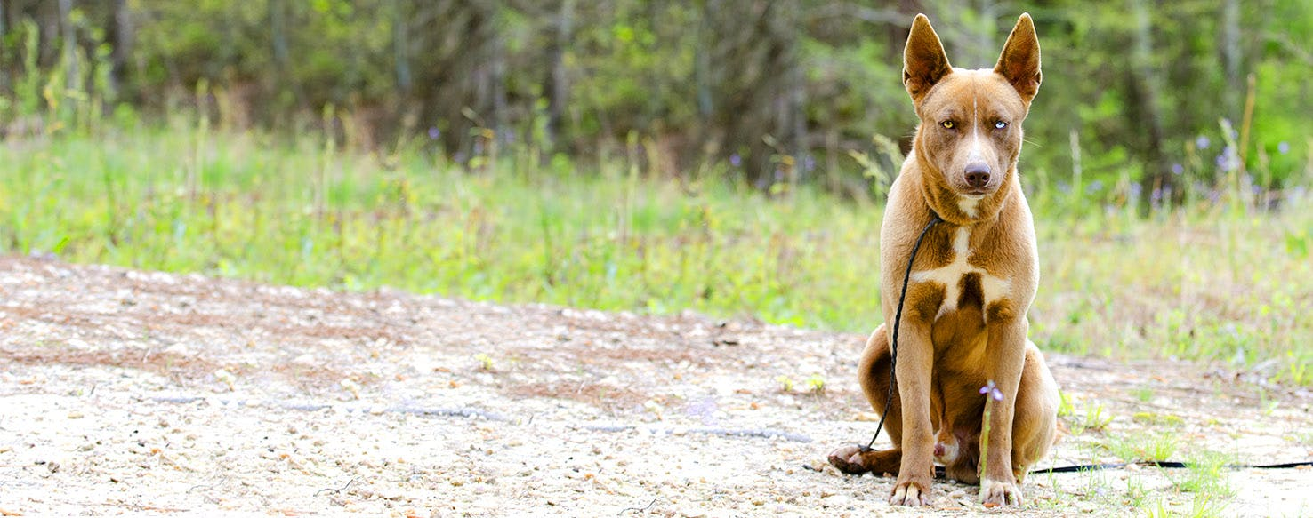Dog Names Inspired By Mythology Popular Male And Female Names Wag