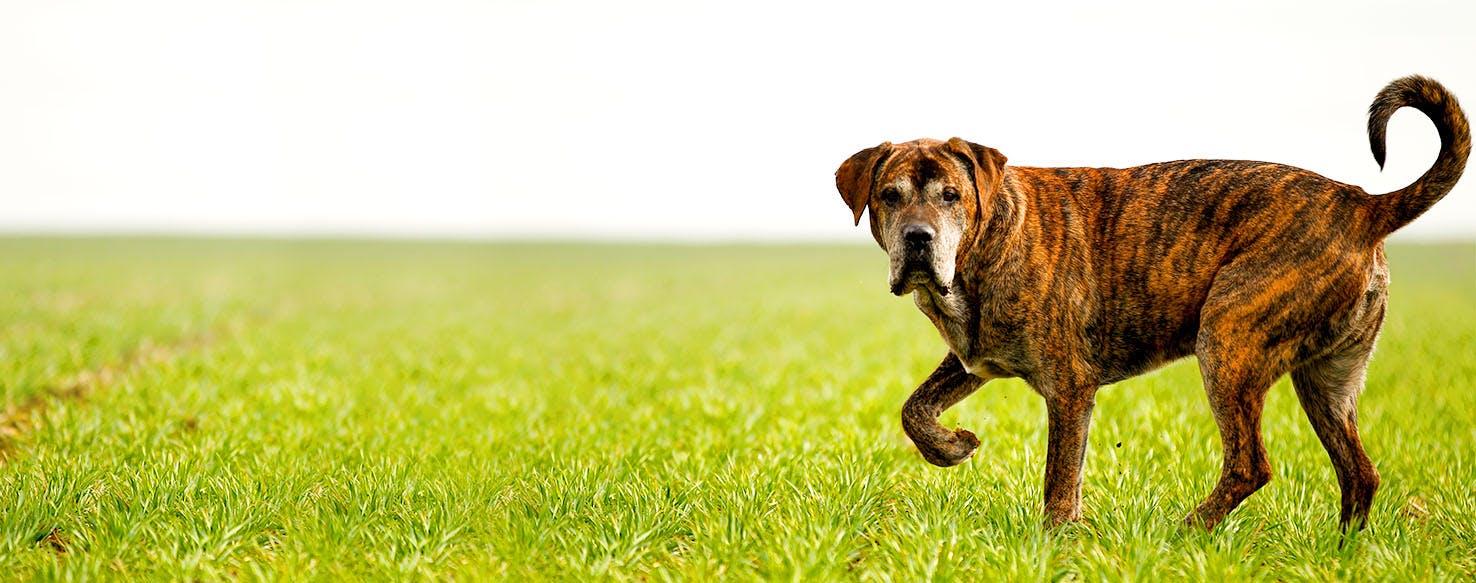 Brindle Dog Names | Popular Male and Female Names | Wag!