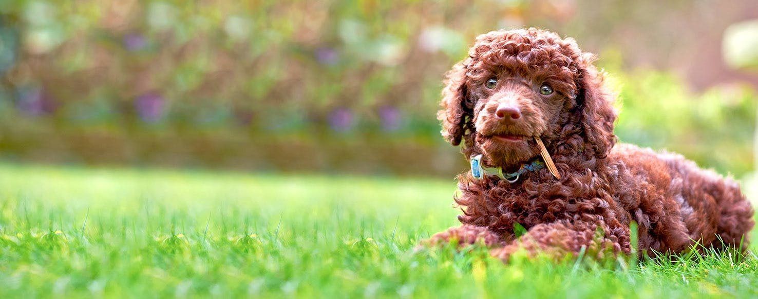 Dog Names Meaning Strong   Popular Male And Female Names ...