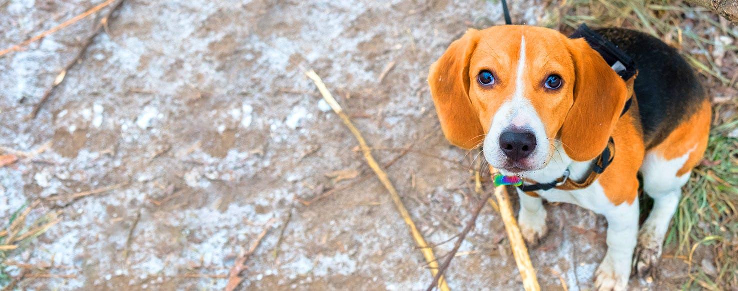 Dog Names That Start With Mr Popular Male And Female Names Wag Sleeping dogs pierwotnie miała być trzecią częścią serii true crime, jednakże po perturbacjach prawnych konieczna okazała się zmiana tytułu. dog names that start with mr popular
