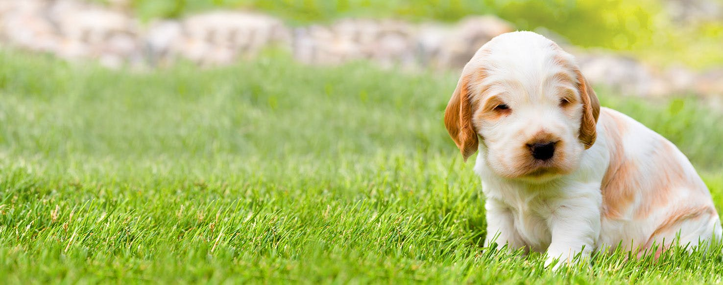 Dog Names Meaning Miracle | Popular Male and Female Names | Wag!