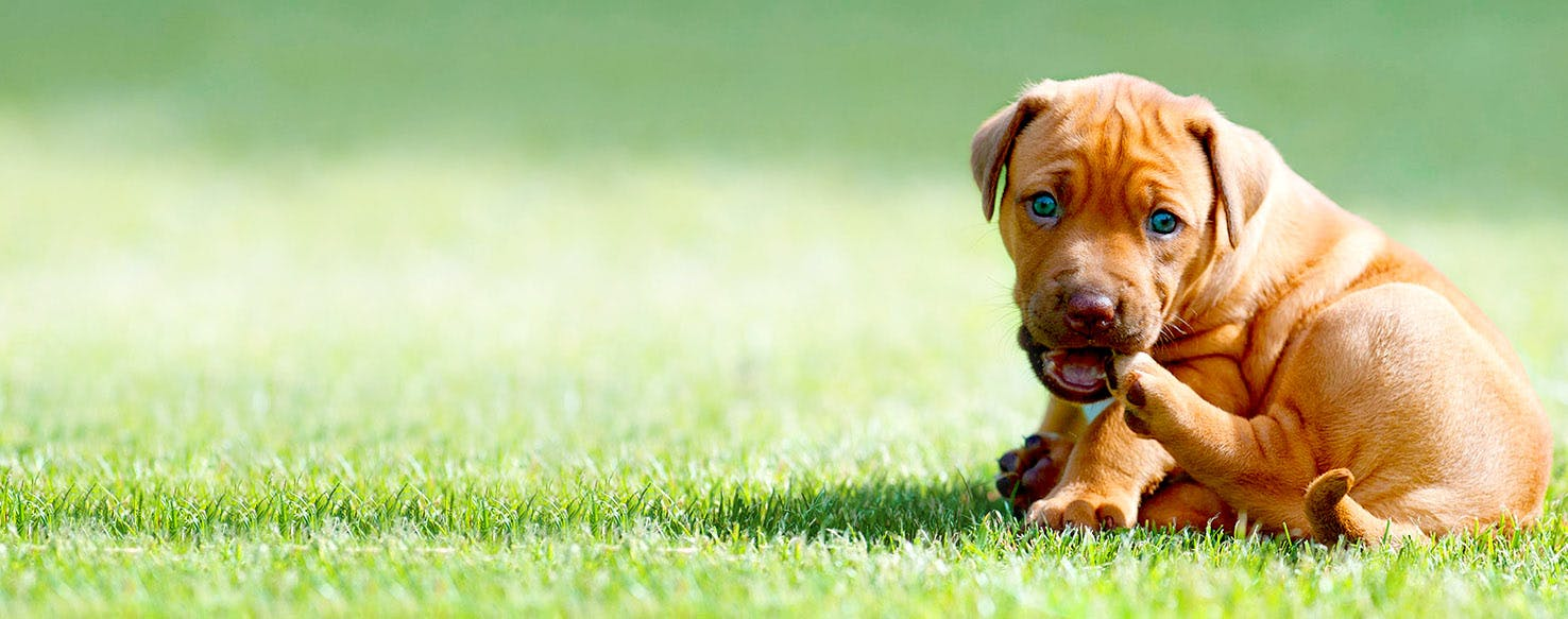 Dog Names Meaning Second Chance | Popular Male and Female ...