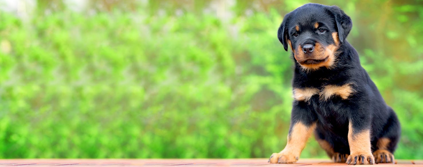 Mobster Dog Names | Popular Male and Female Names | Wag!