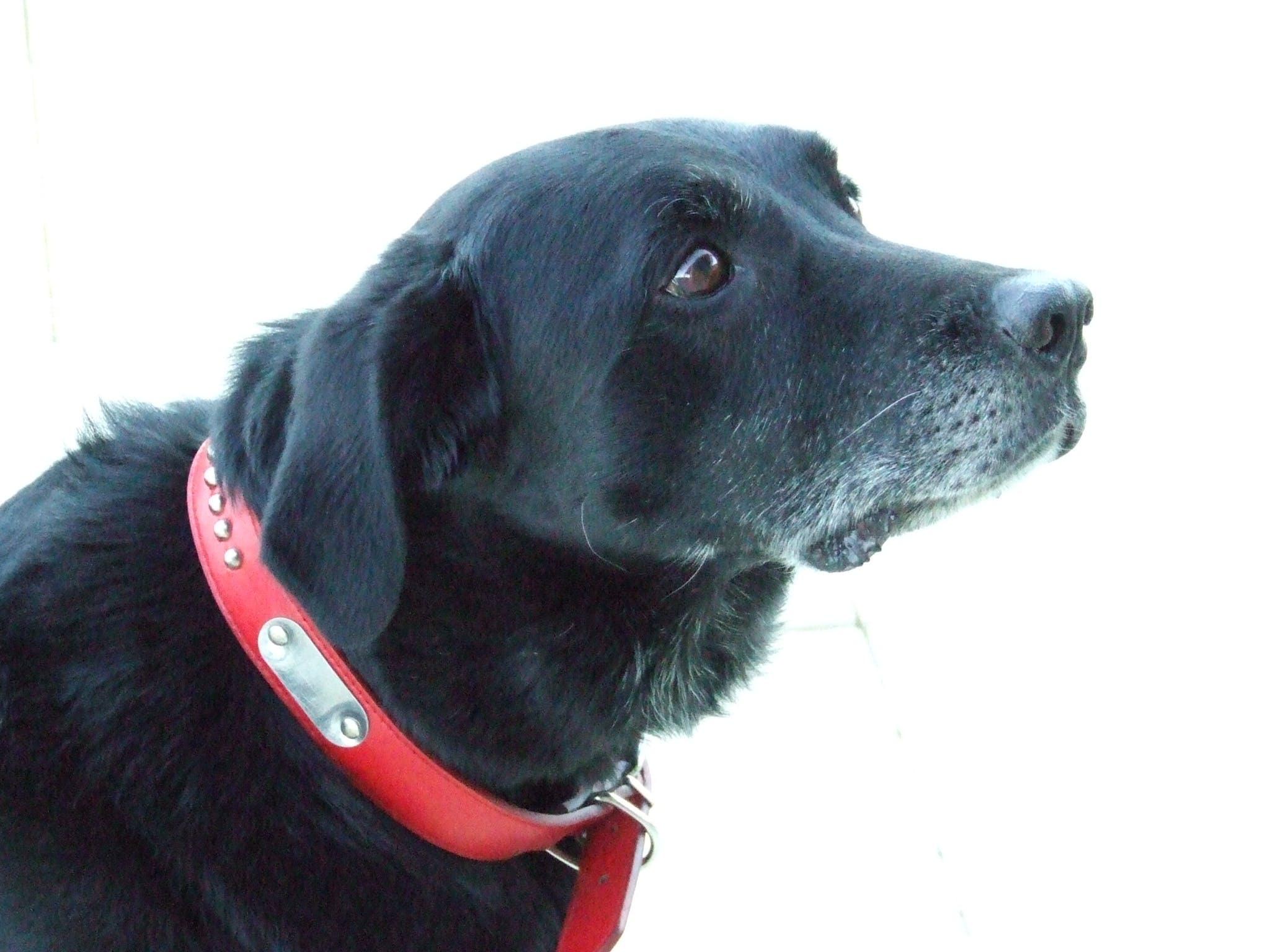 Ranger's name story for 60 Ideas For Dog Names