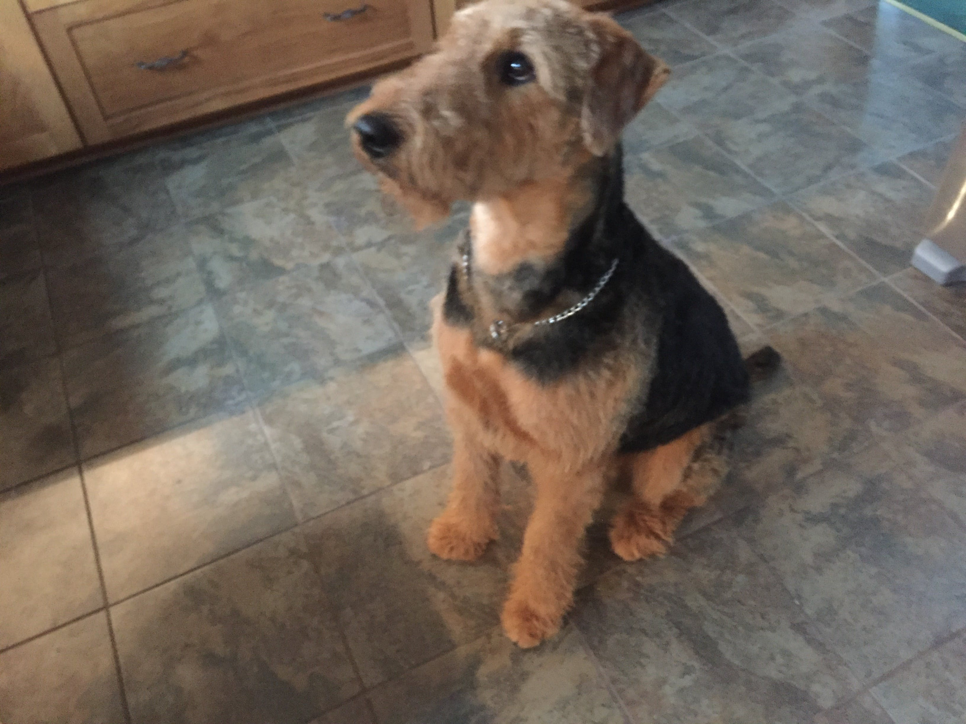 Tabac's name story for Airedale Terrier Dog Names