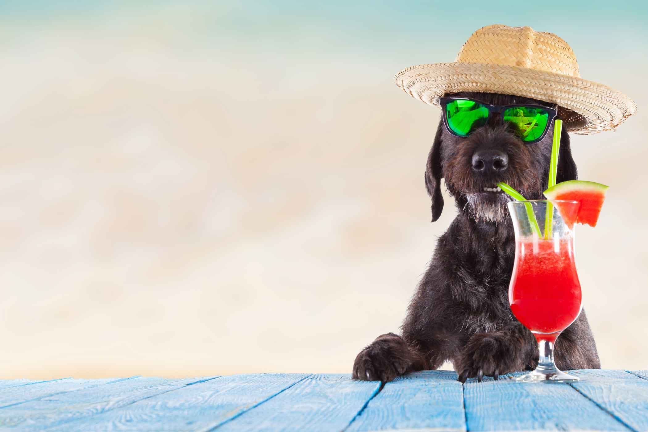 Dog Names Inspired By Alcohol