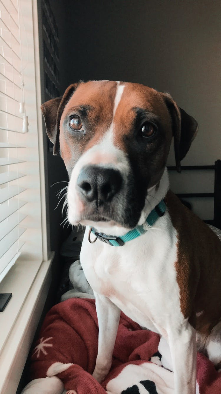 Maggie's name story for American Staffordshire Terrier Dog Names
