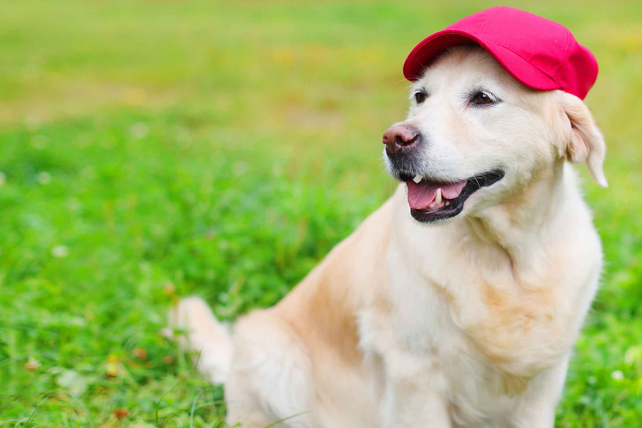 Dog Name Ace
