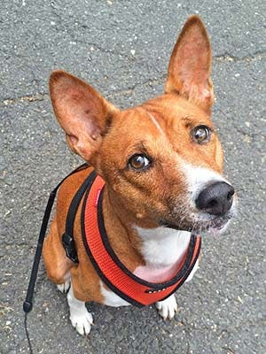 Athena's name story for Basenji Dog Names