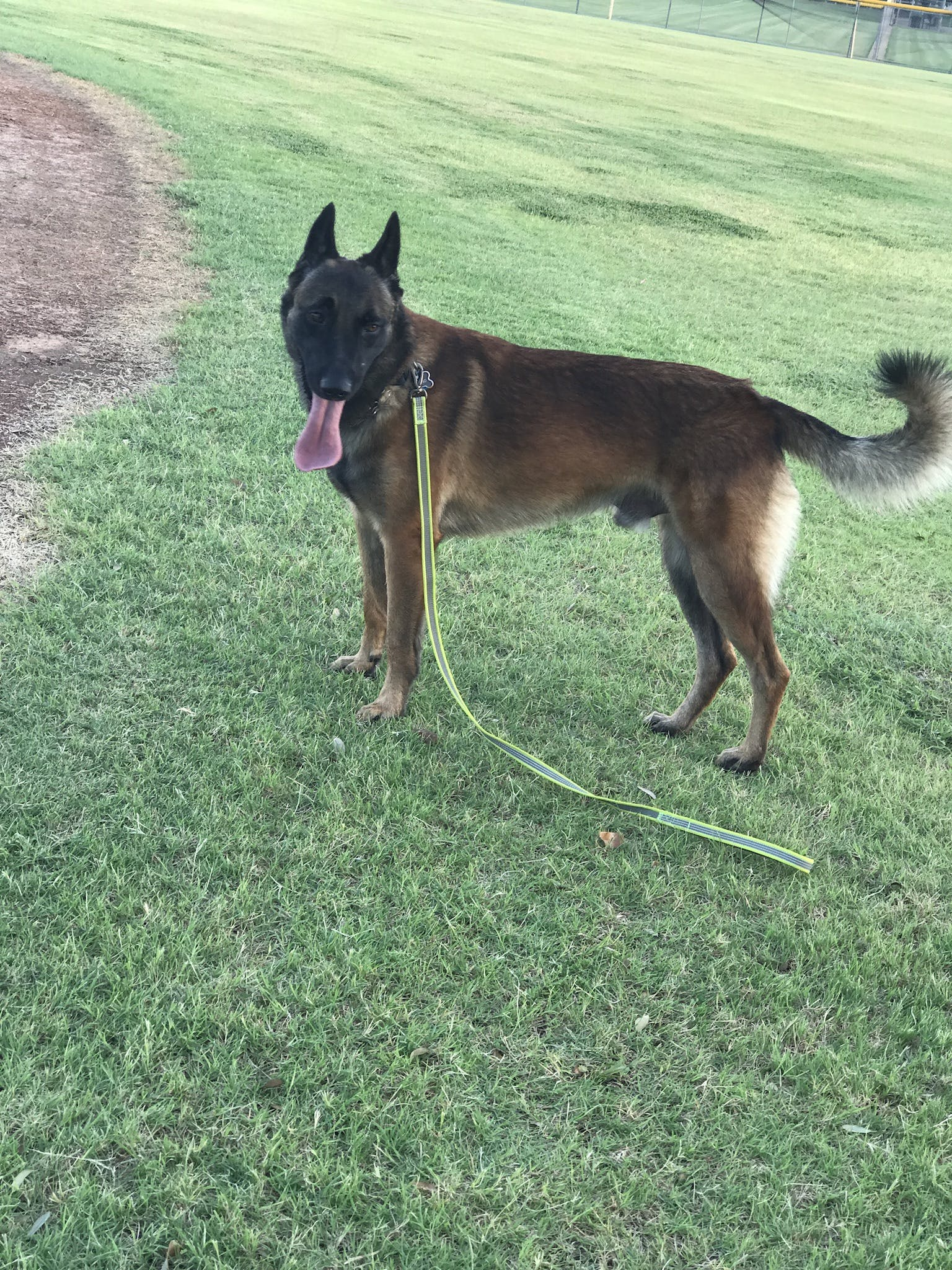 Gambino's name story for Belgian Malinois Dog Names