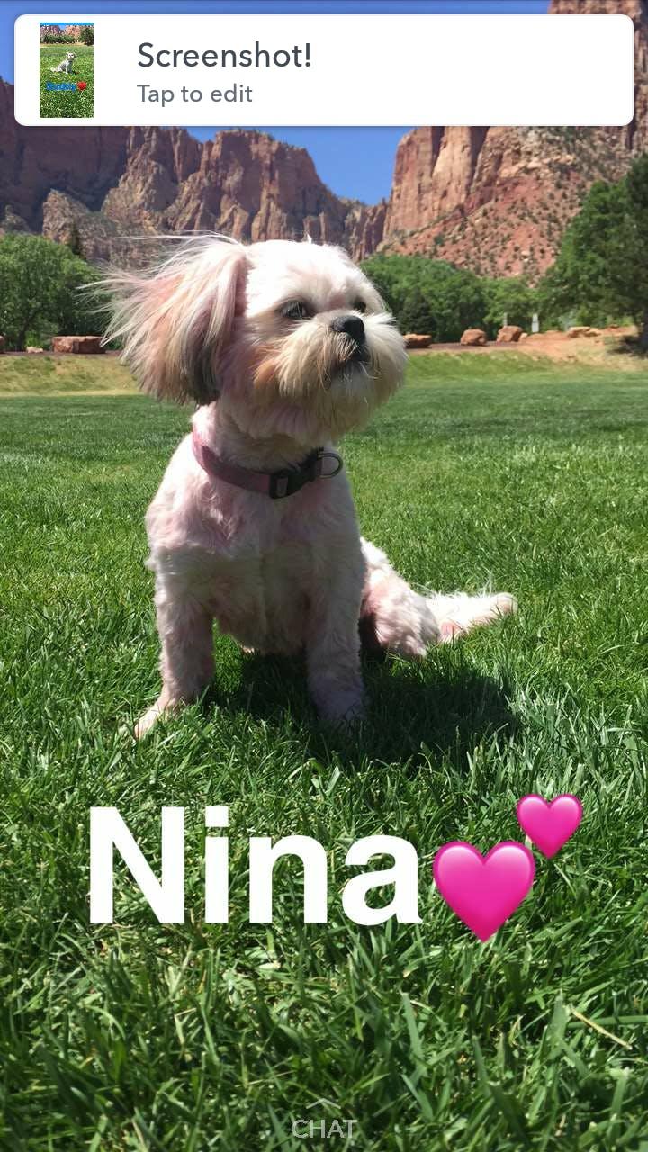 Nina's name story for Best 4-Letter Dog Names