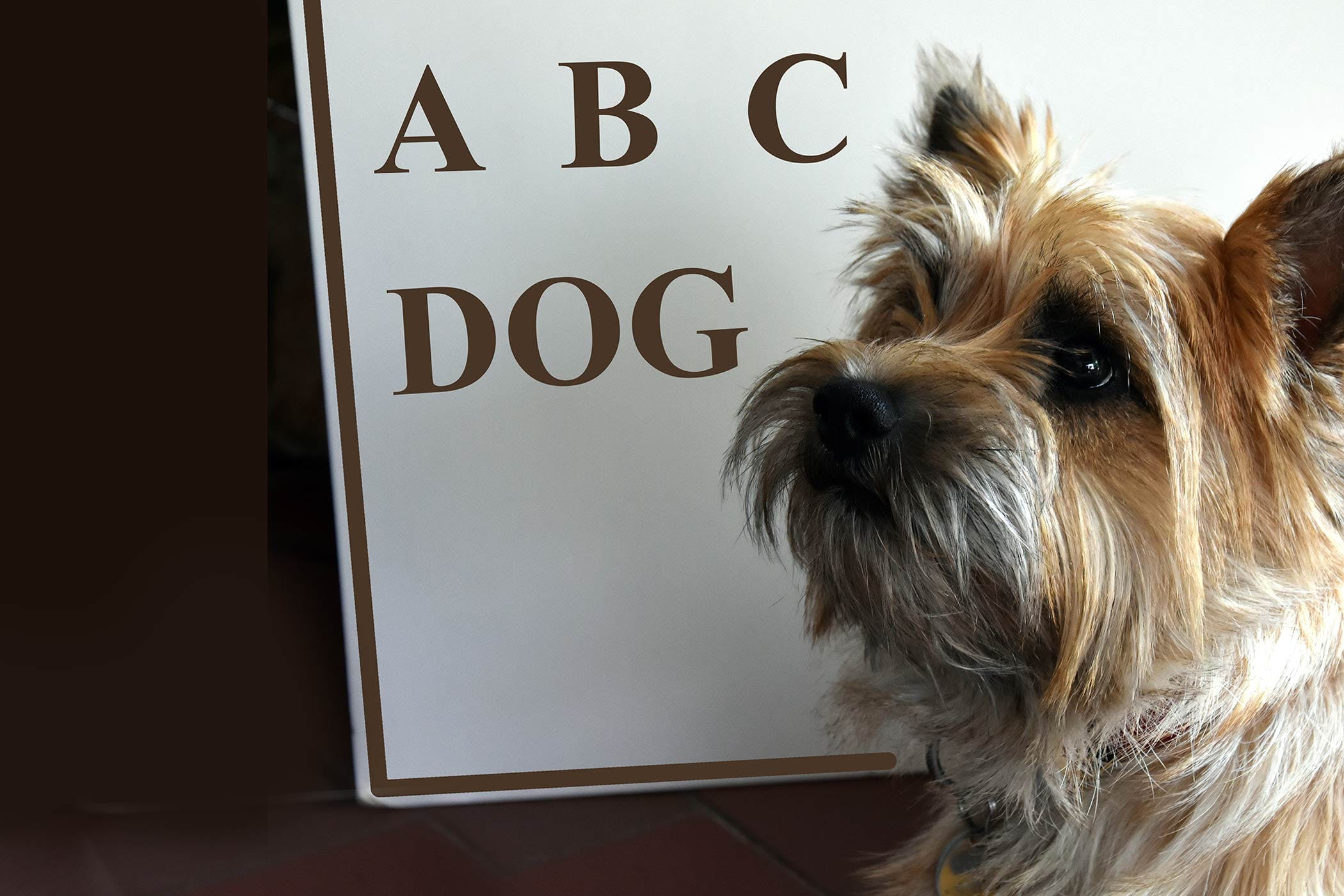 One Syllable Dog Male Names