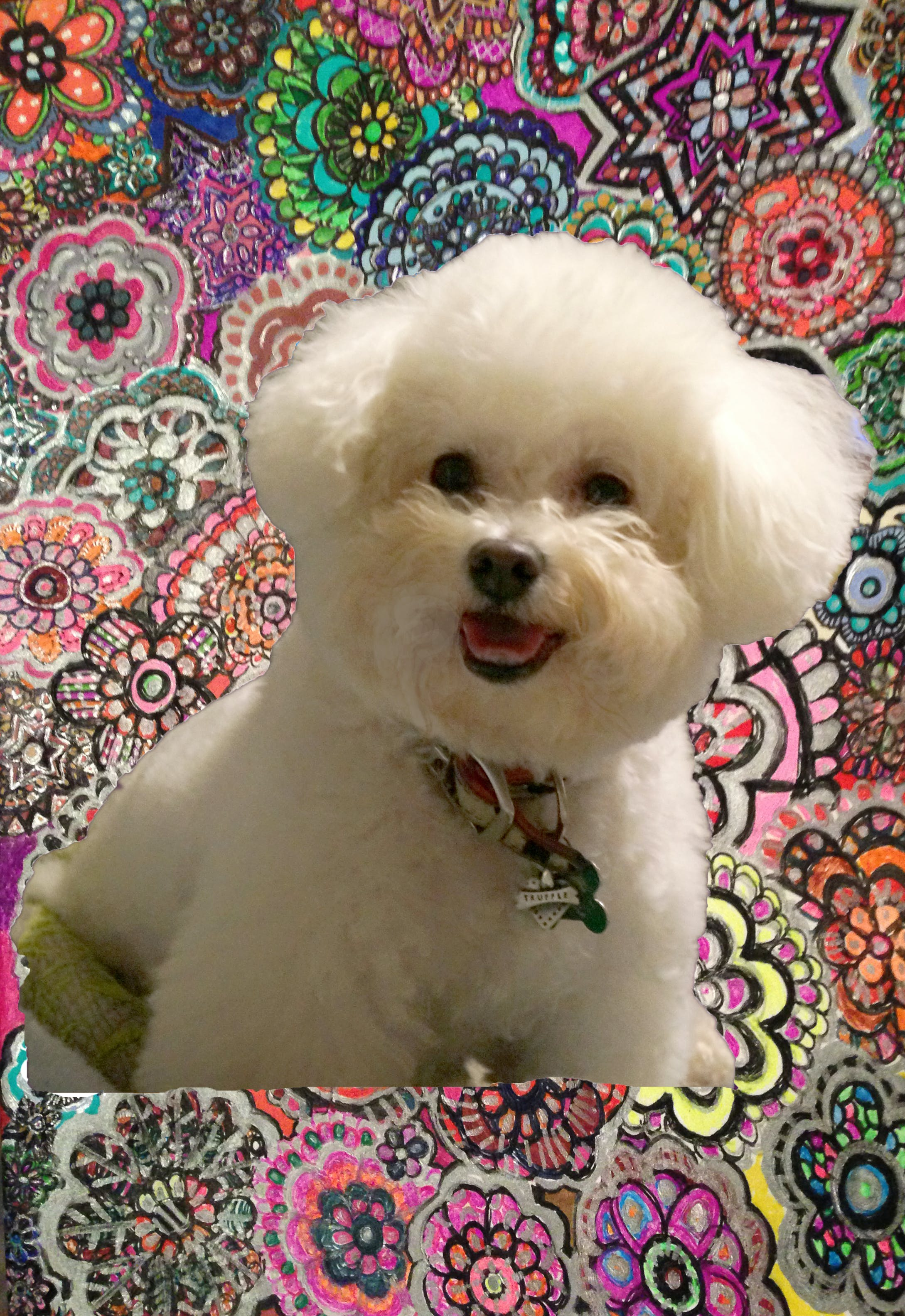 Truffle's name story for Bichon Frise Dog Names