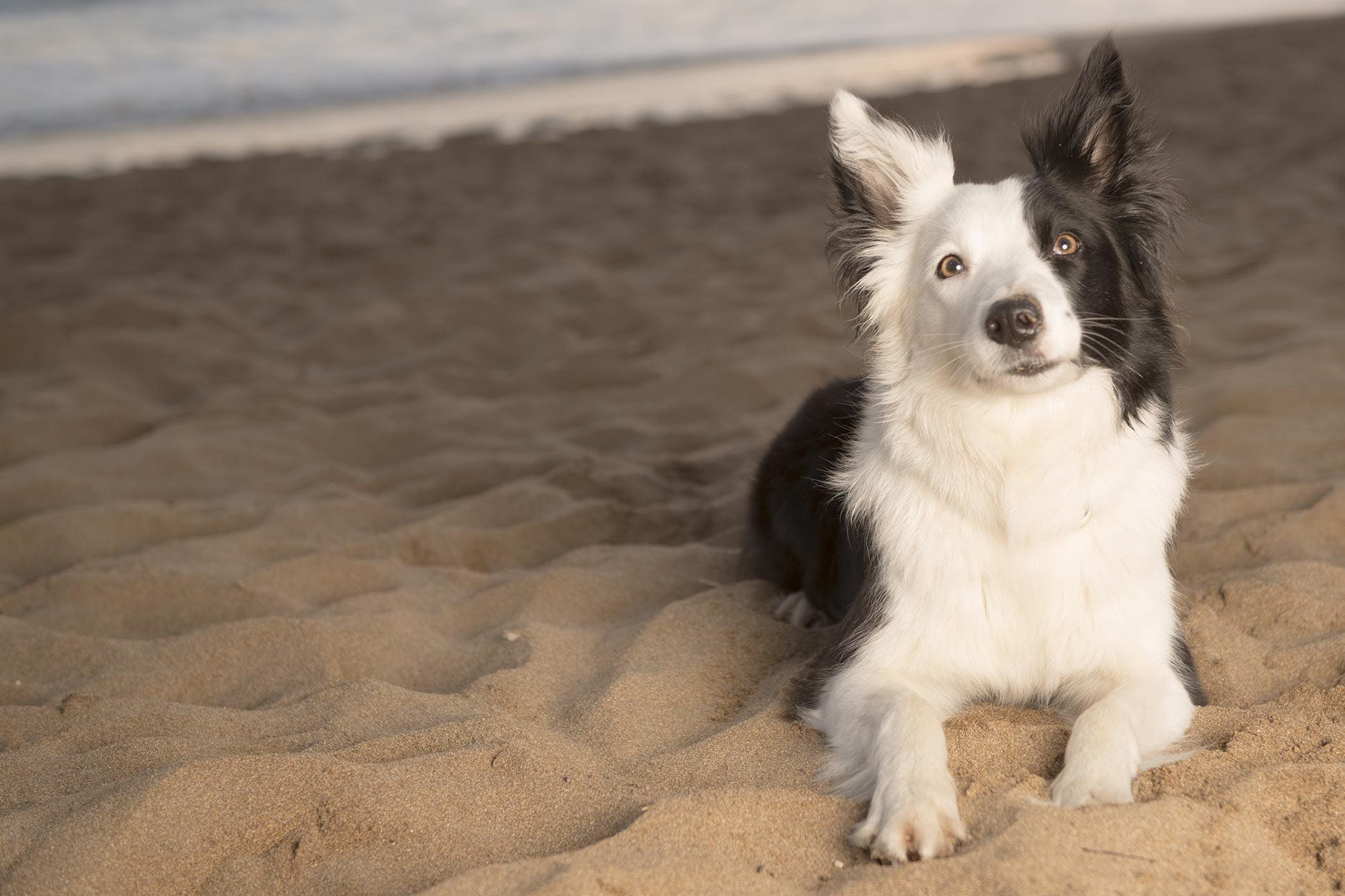 1163ecd0c Border Collie Names | Popular Male and Female Names | Wag!