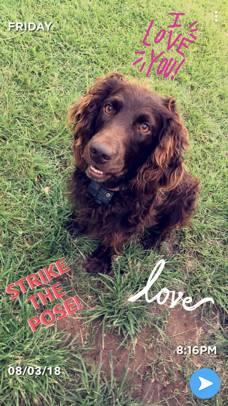 Muddy's name story for Boykin Spaniel Dog Names