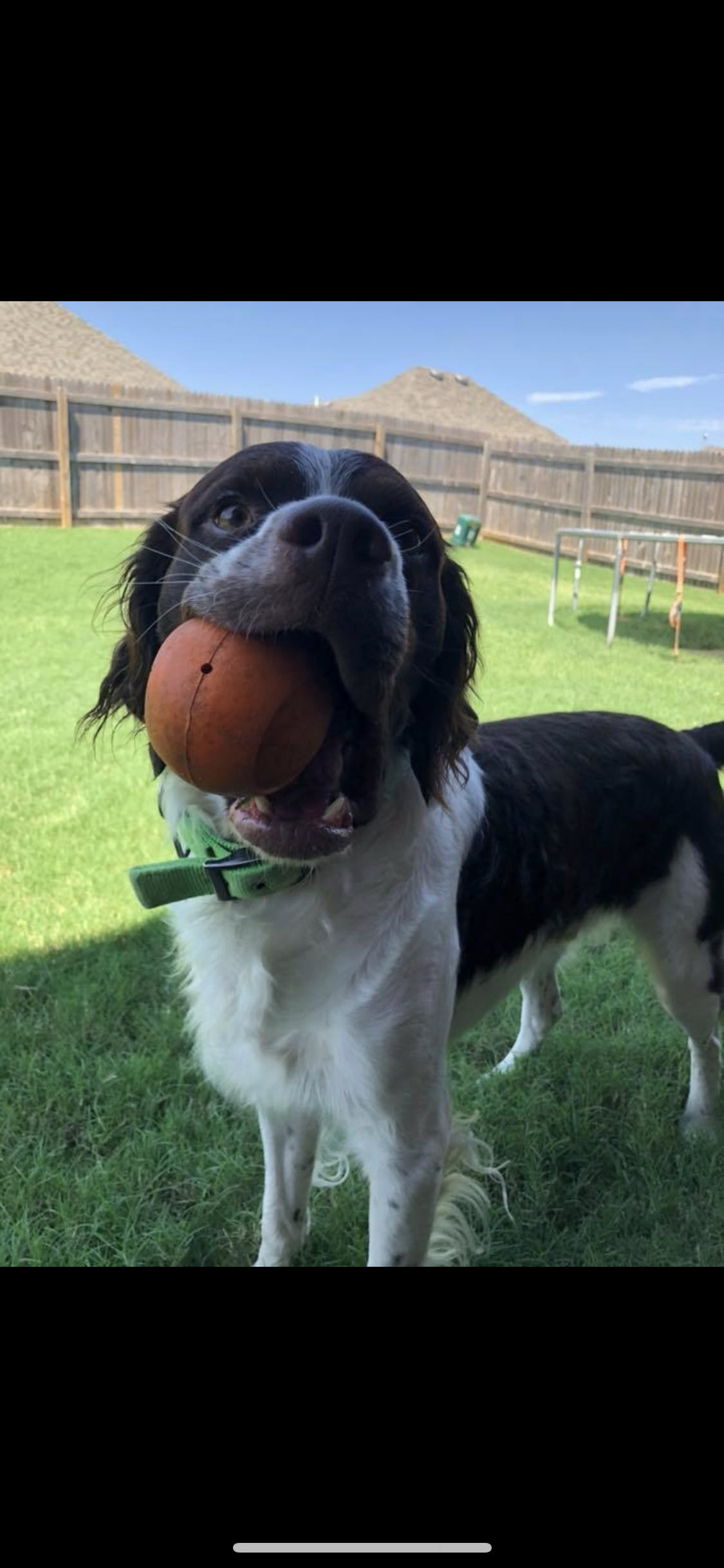 Blaze's name story for Brittany Dog Names