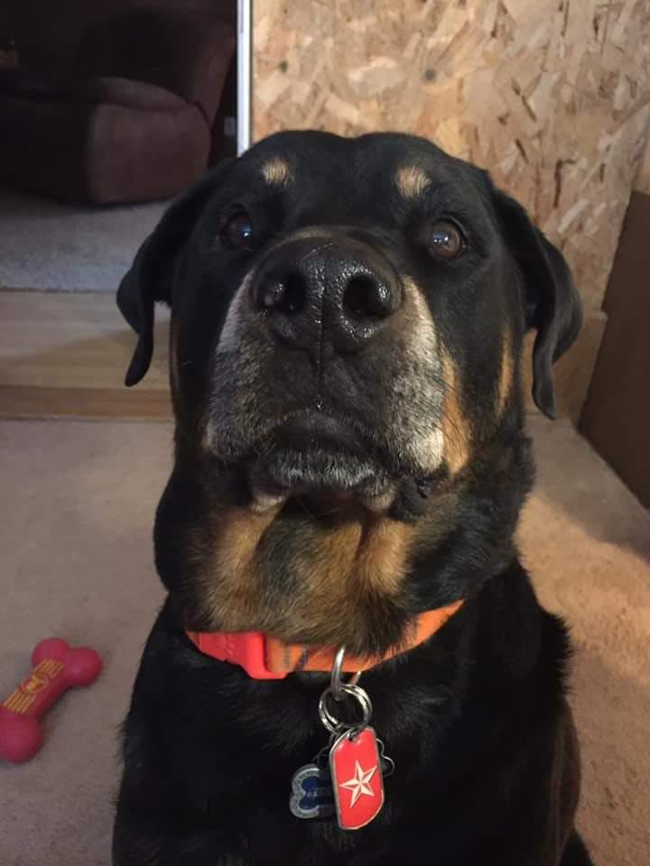 Kota's name story for Cherokee Dog Names