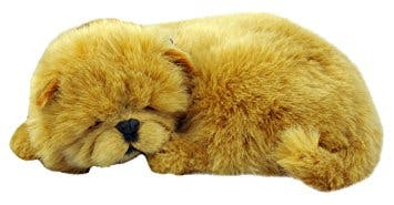 Teddy's name story for Chow Chow Dog Names