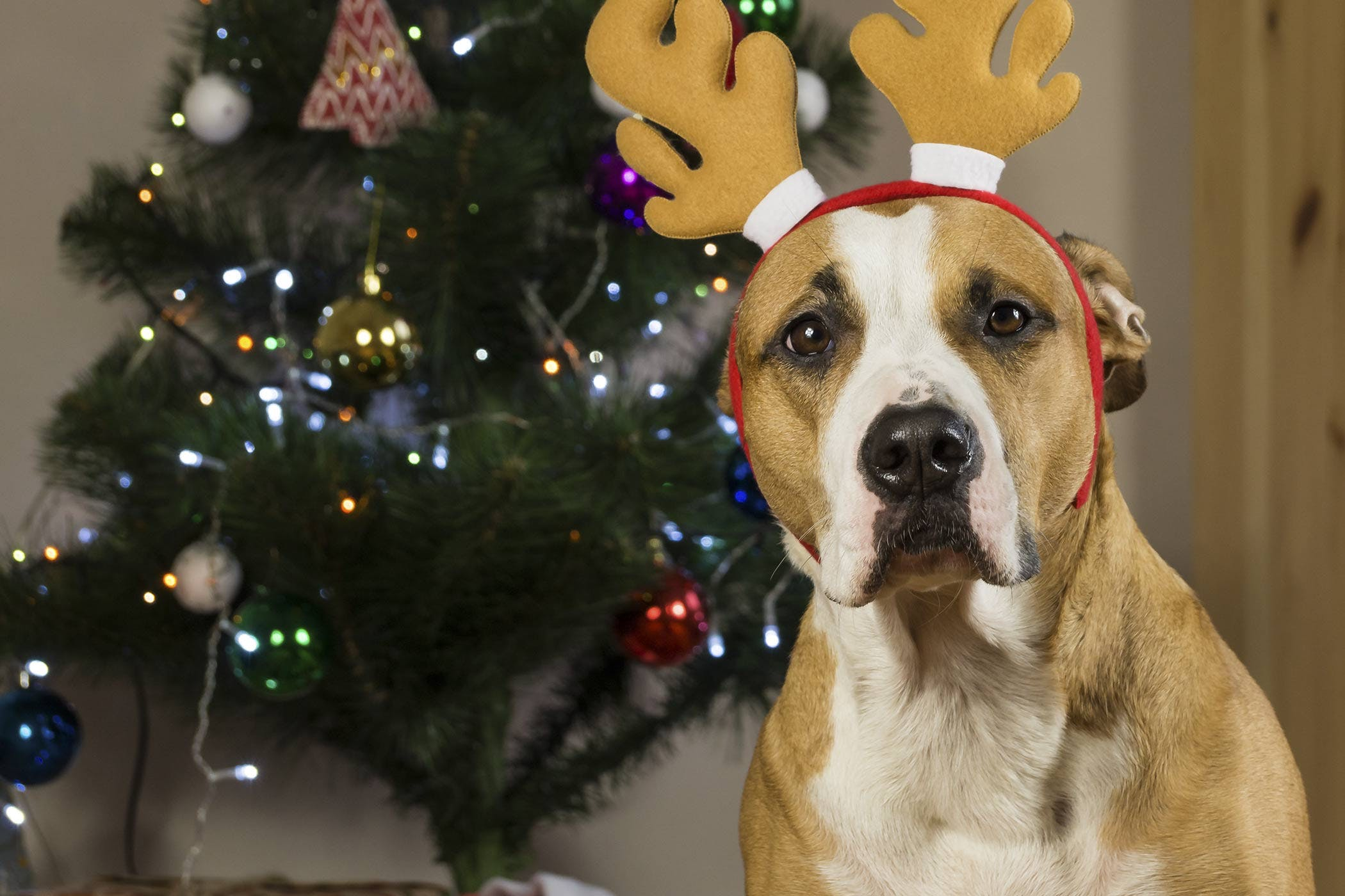christmas dog names popular male and female names wag