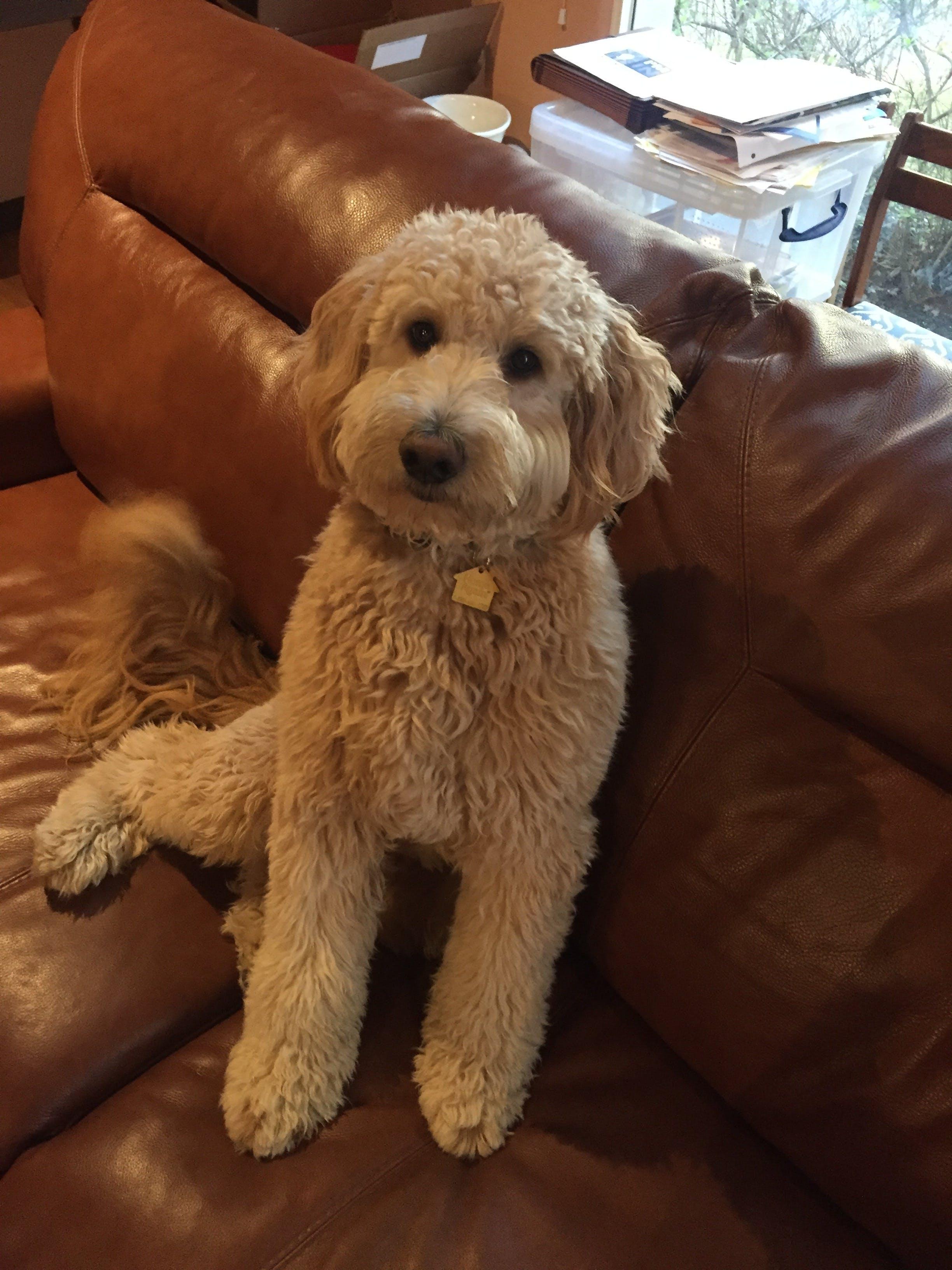 Reggie's name story for Dog Names Ending in ie