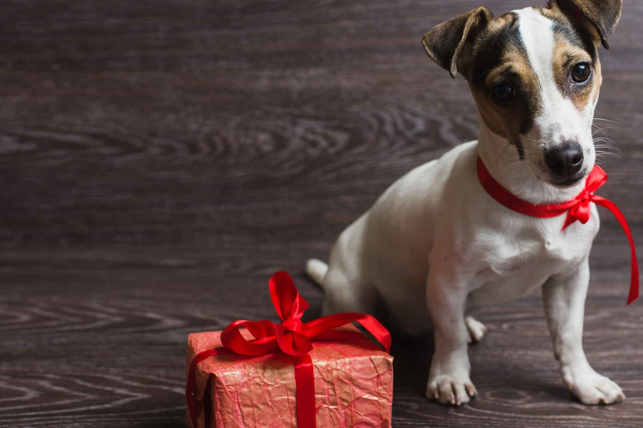 Dog Names Meaning Gift of God | Popular Male and Female