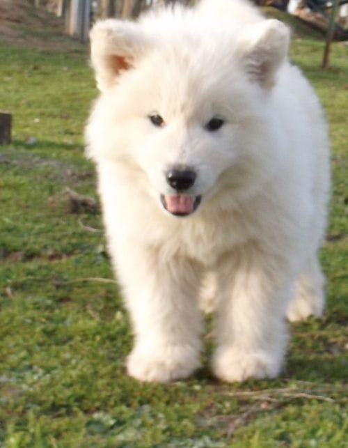 Snowy's name story for Dog Names Meaning White