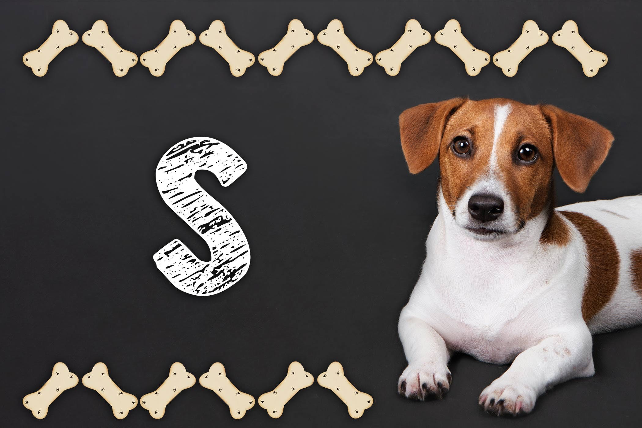 Stephen King Inspired Dog Names | Popular Male and Female