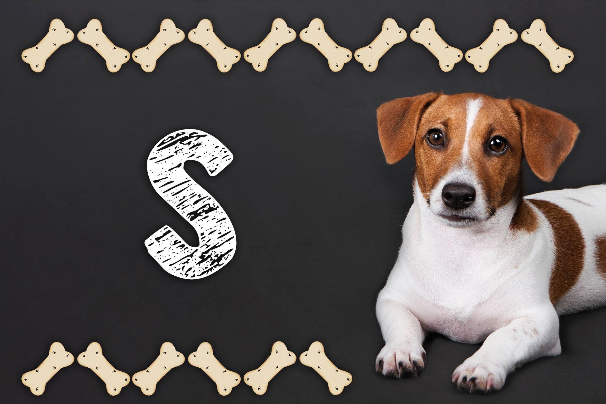 Labrador Retriever Dog Names | Popular Male and Female Names