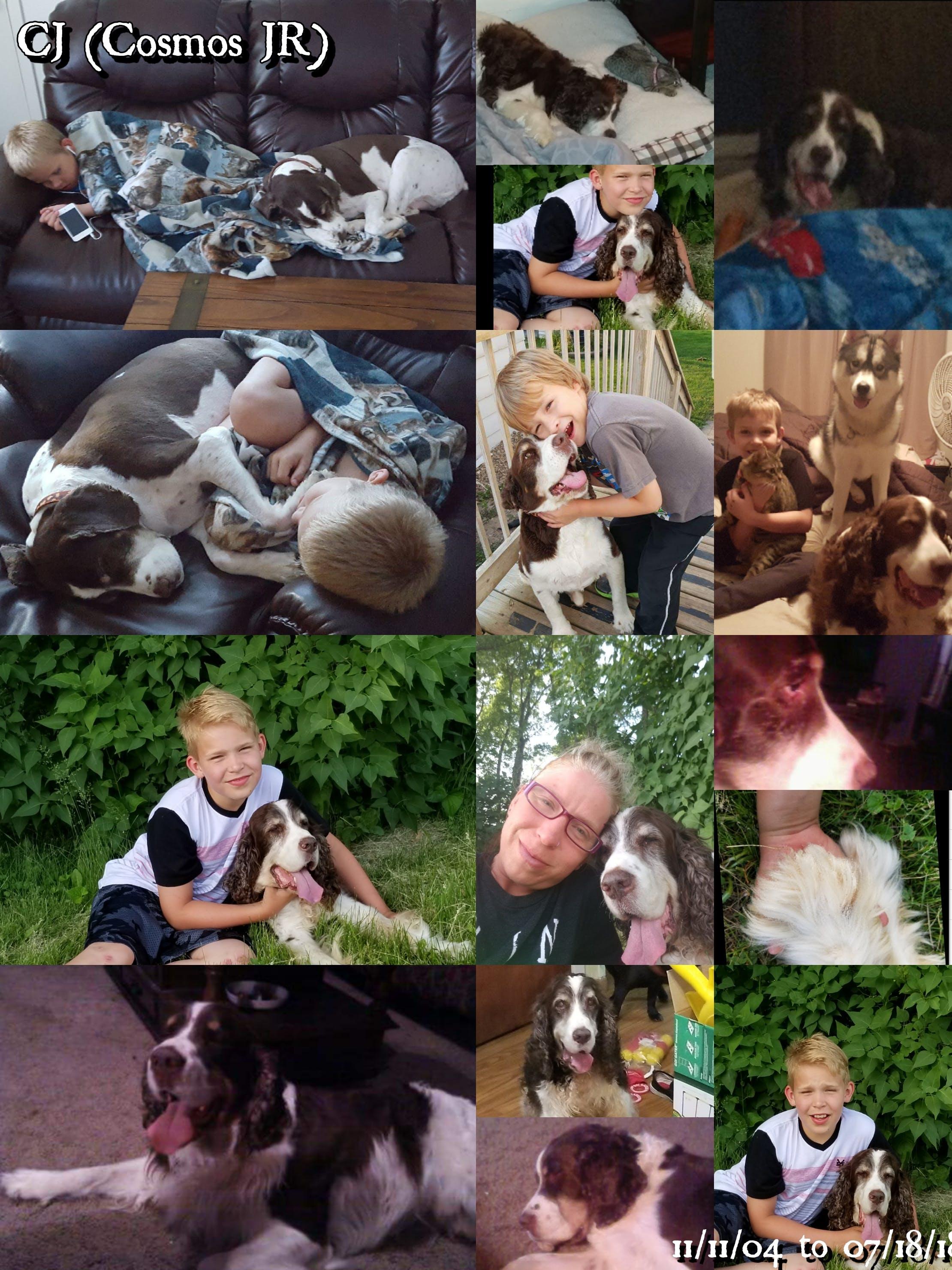 Cosmos jr's name story for English Springer Spaniel Dog Names