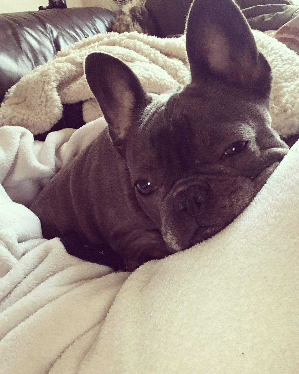 Aurora's name story for French Bulldog Dog Names