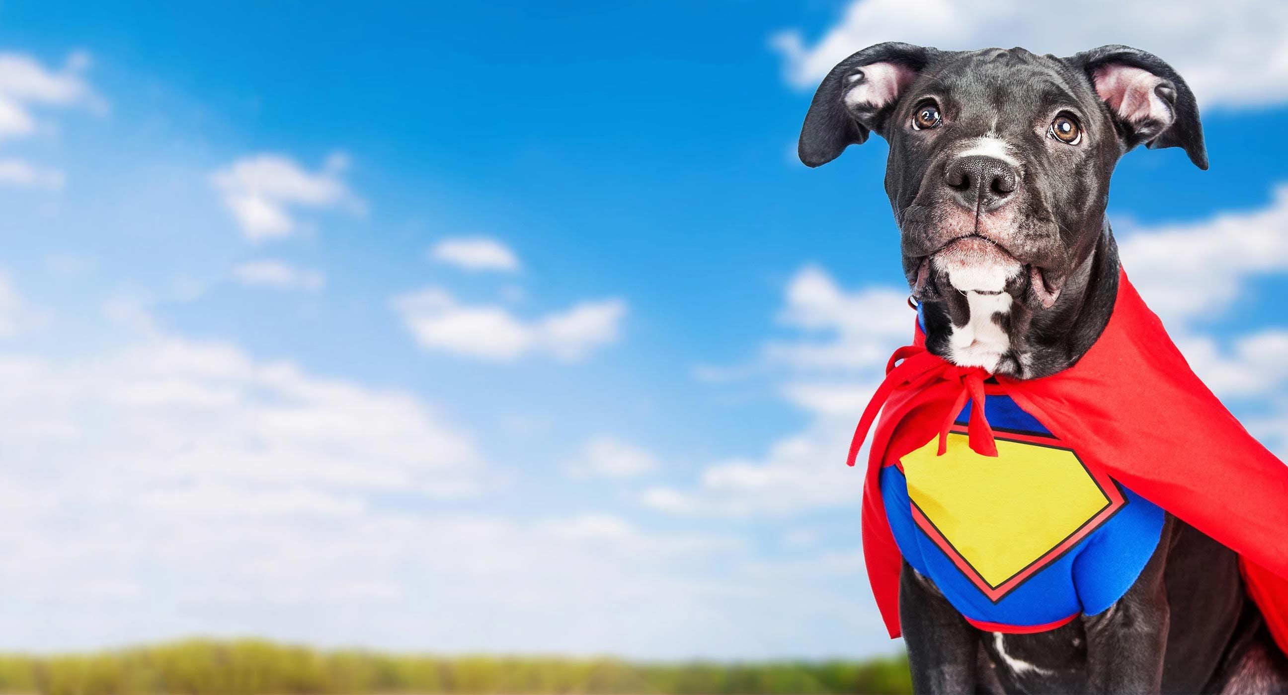 Hero Dog Names Popular Male And Female Names Wag