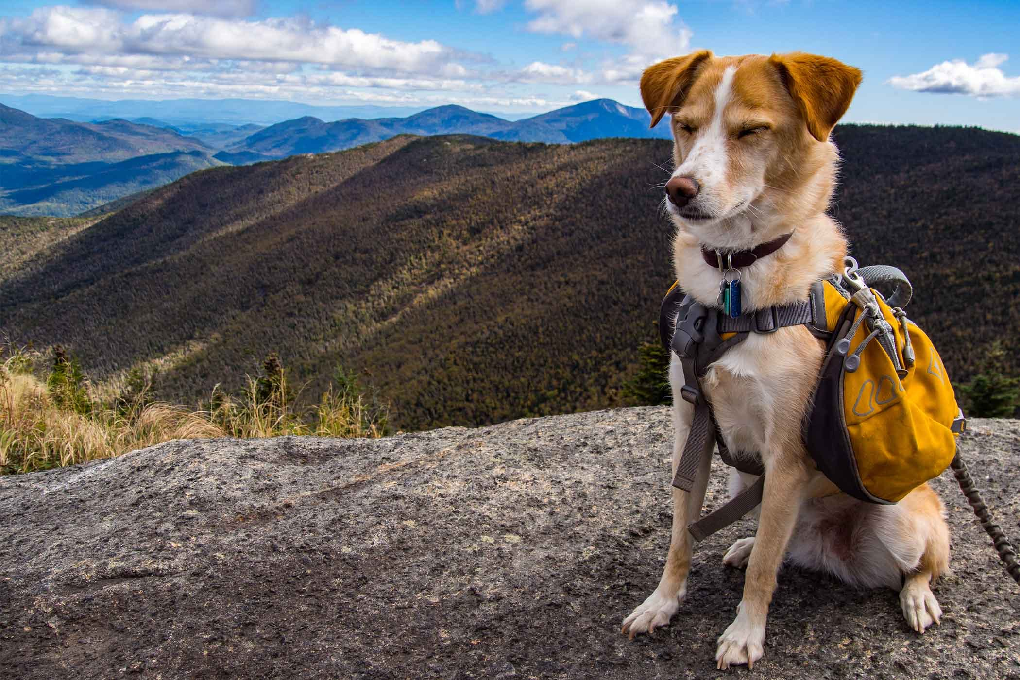 Hiking Inspired Dog Names | Popular Male and Female Names | Wag!