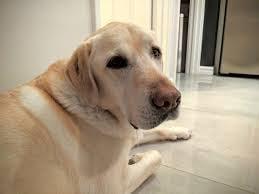Mikko's name story for Ice Hockey Inspired Dog Names