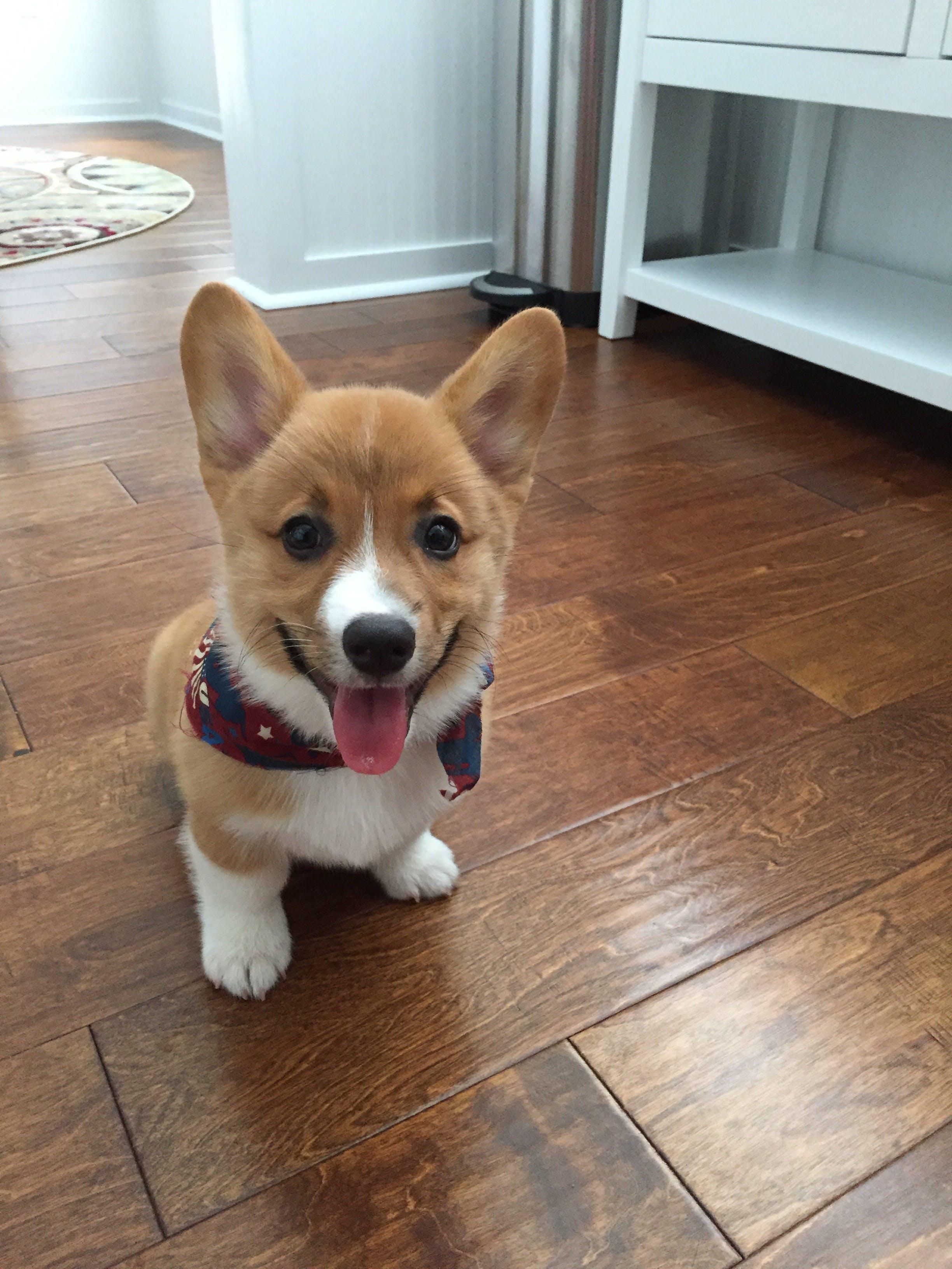 Pip's name story for Literary Inspired Dog Names
