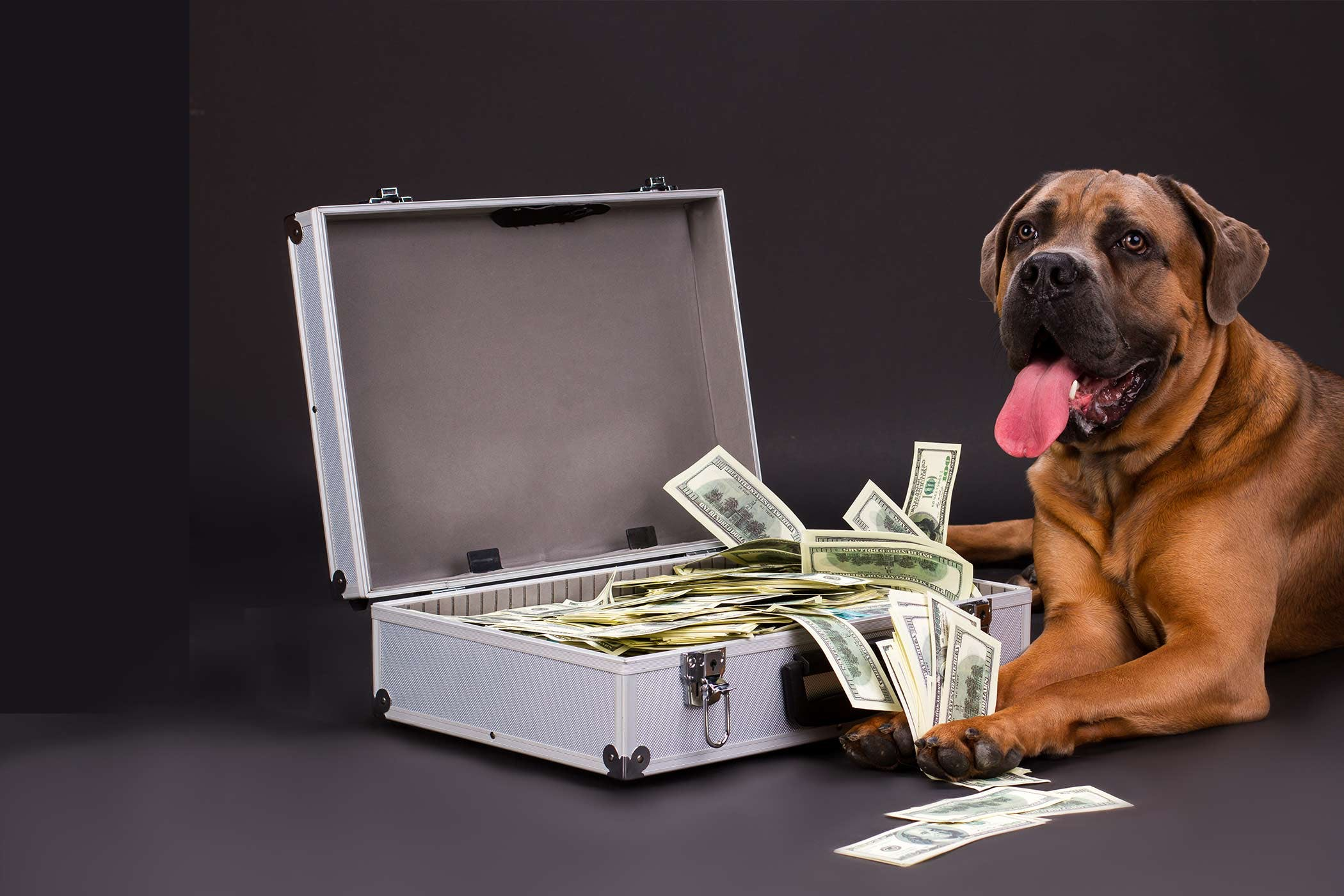 Money Related Names For Dogs