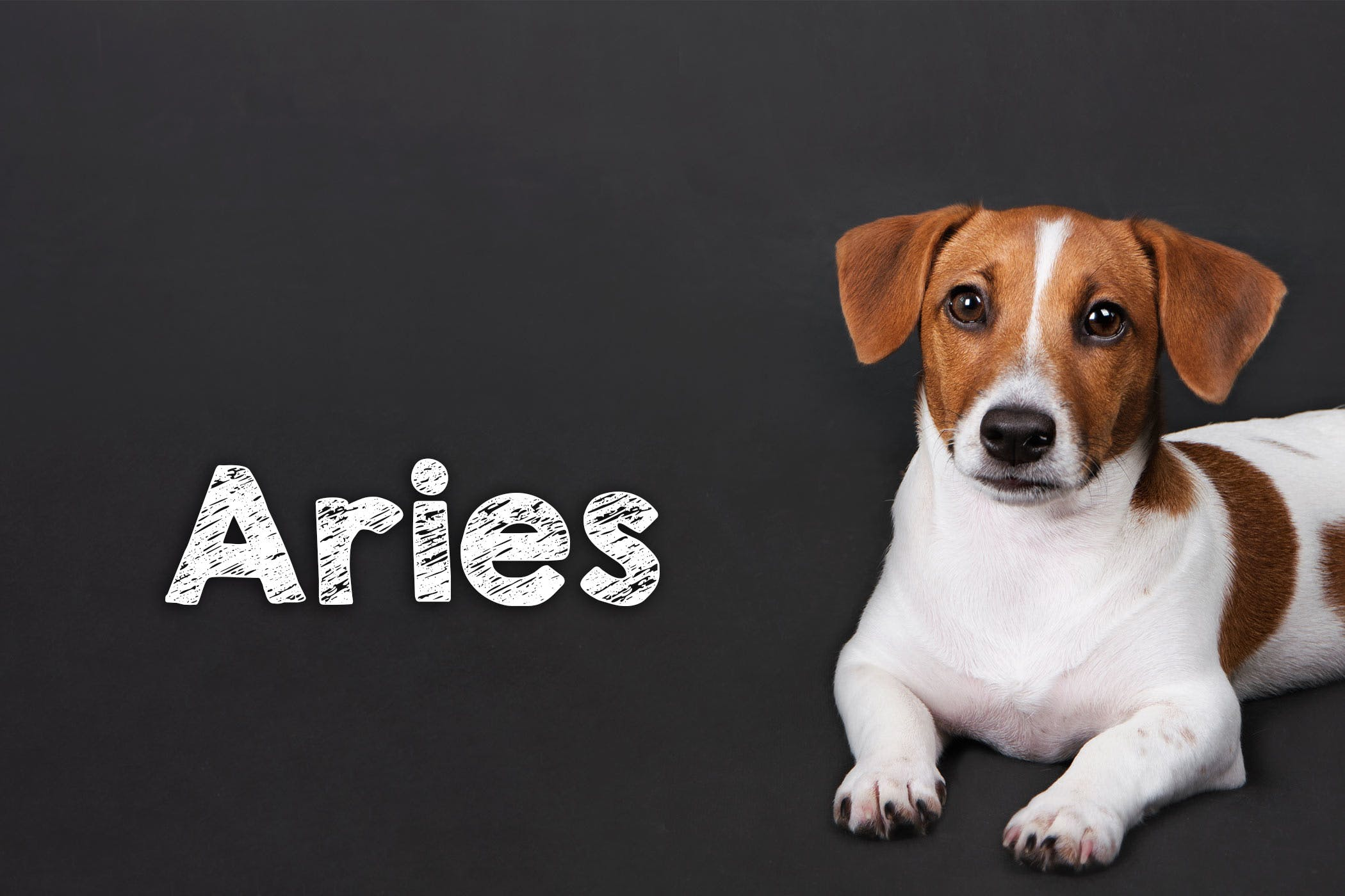 Mythological Dog Names | Popular Male and Female Names | Wag!