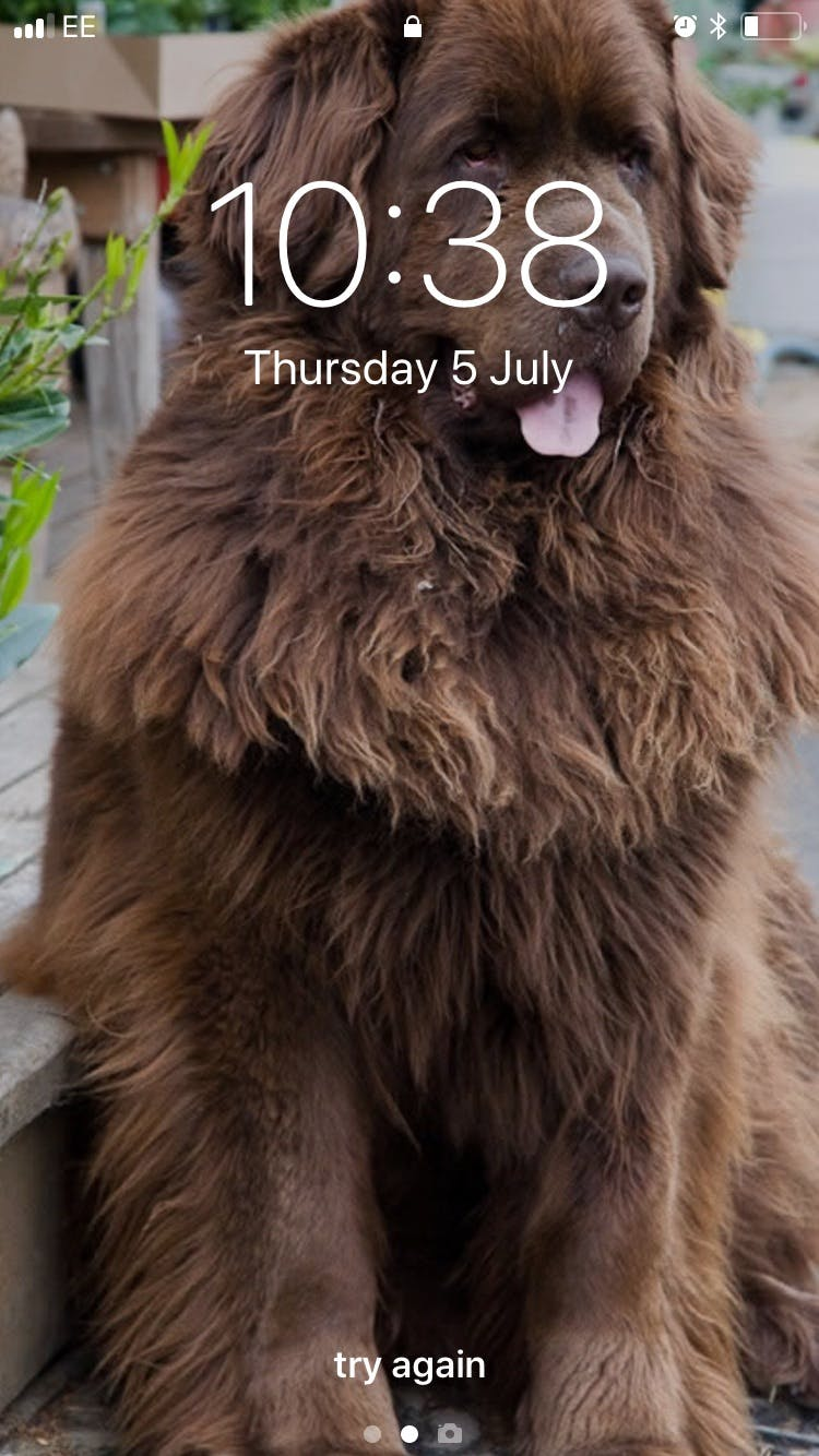 Bea's name story for Newfoundland Dog Names
